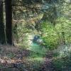 felton-woods
