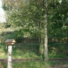 community-woodland-1